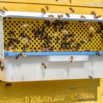Bienen Pollenfalle