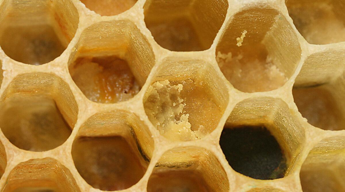 Bienenwabenzelle