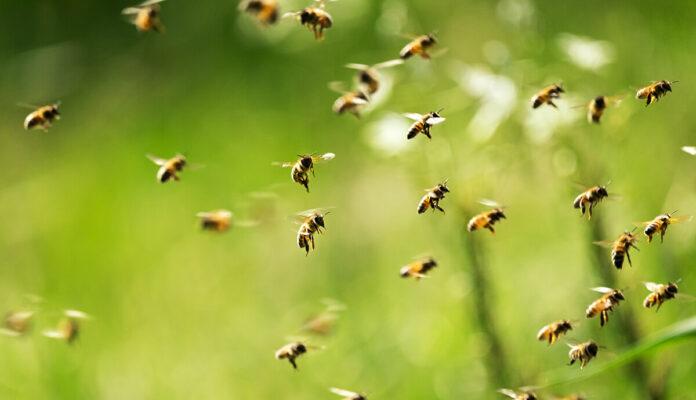 Ein Bienen Schwarm