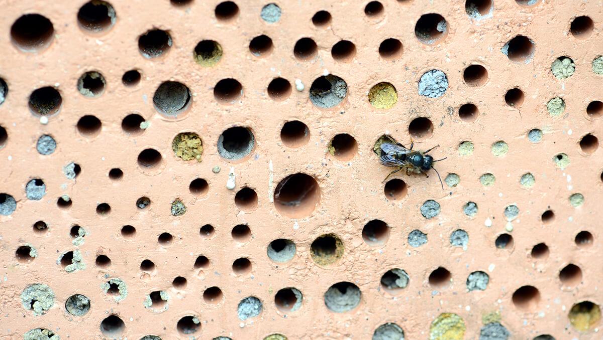 Bienenhotel aus Ziegelstein mit Nistlöchern