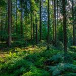 Tannenhonig aus dem Schwarzwald