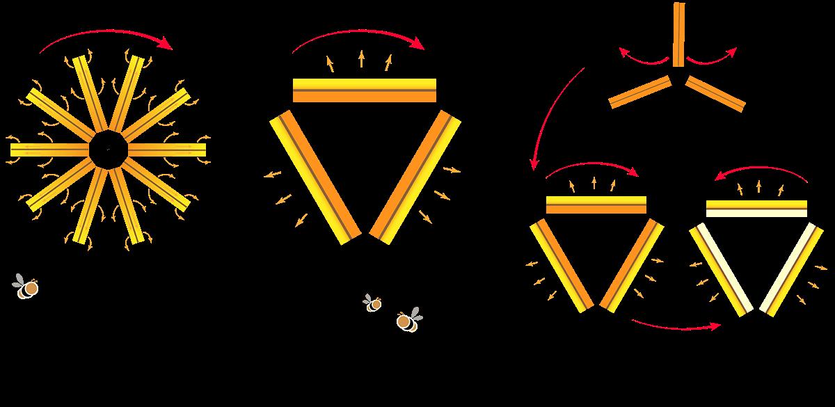 Arten von Honigschleudern