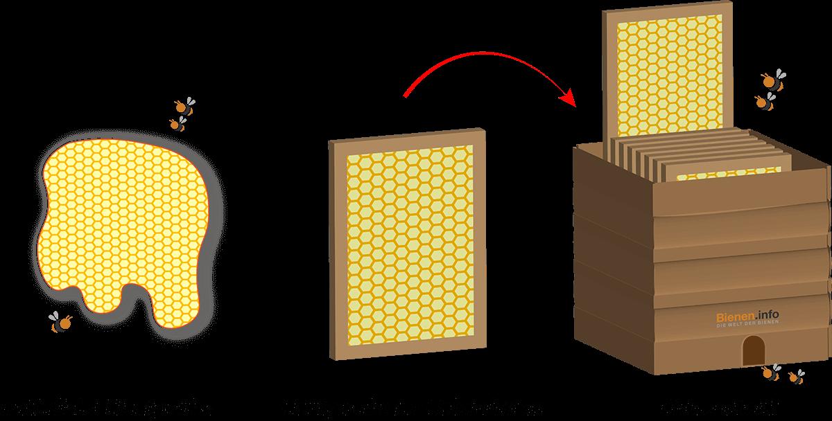 Honigwabe im Holzrahmen.