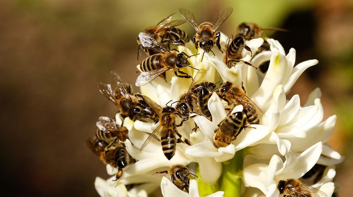 Bienen auf Pflanze