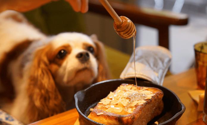 Hunde Honig