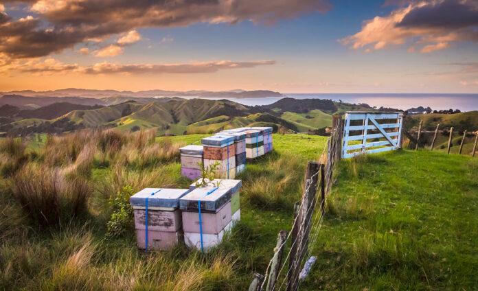 Honig aus Neuseeland
